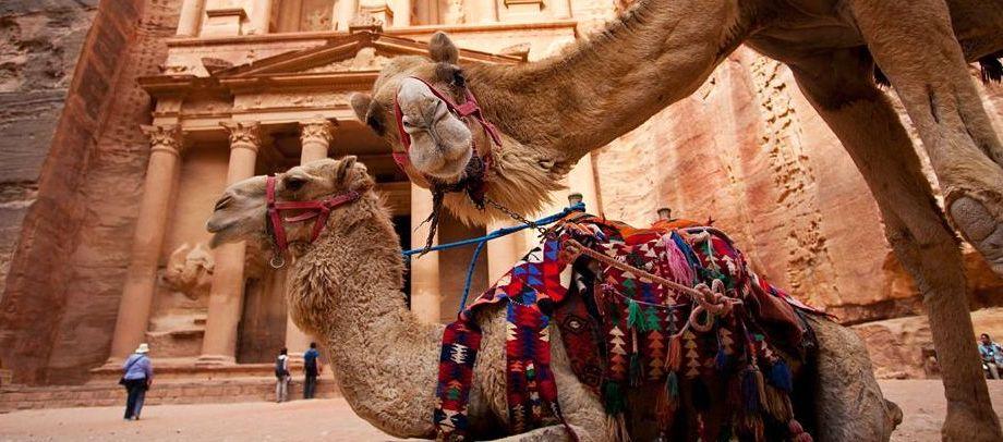 camel petra