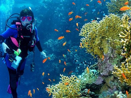 carol-cox-diving-in-the-red-sea-photo-by-my-hubby
